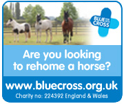 Blue Cross (Derbyshire Horse)
