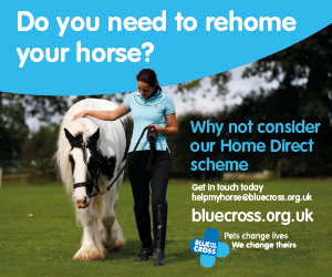 Blue Cross 2020 A (Derbyshire Horse)