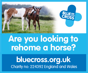 Blue Cross 2020 B (Derbyshire Horse)