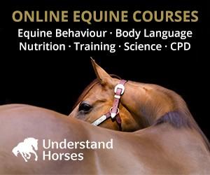 Understand Horses (Derbyshire Horse)